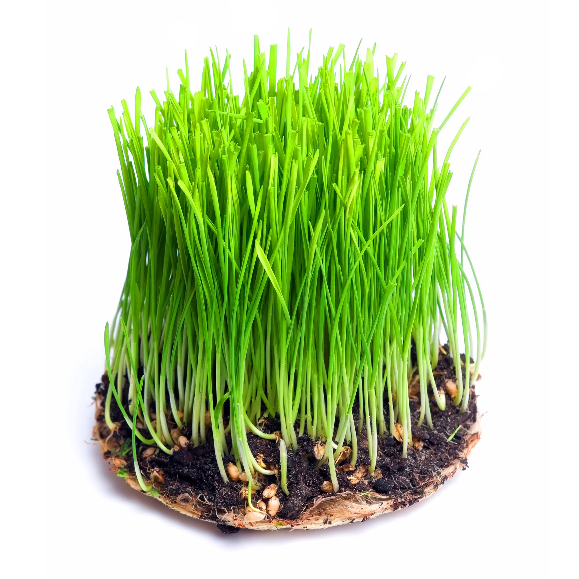Vimergy Barleygrass Juice  U2013 250g  U2013 Flower Of Life