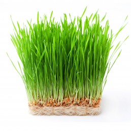 Vimergy Wheatgrass Juice