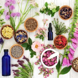 flower-of-life-category-healing-herbs